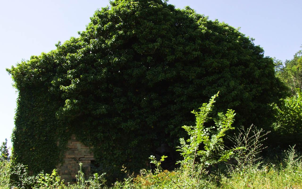 Casa del Tartufo Bianco - Marche Property Net